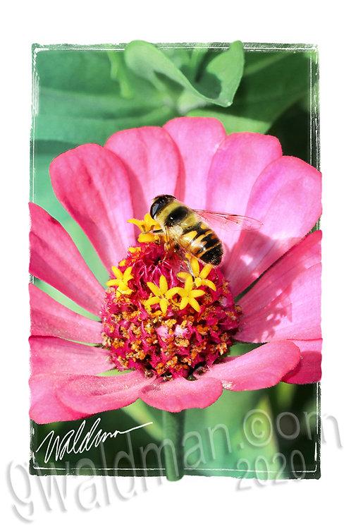 Busy Bee-5x7 art card