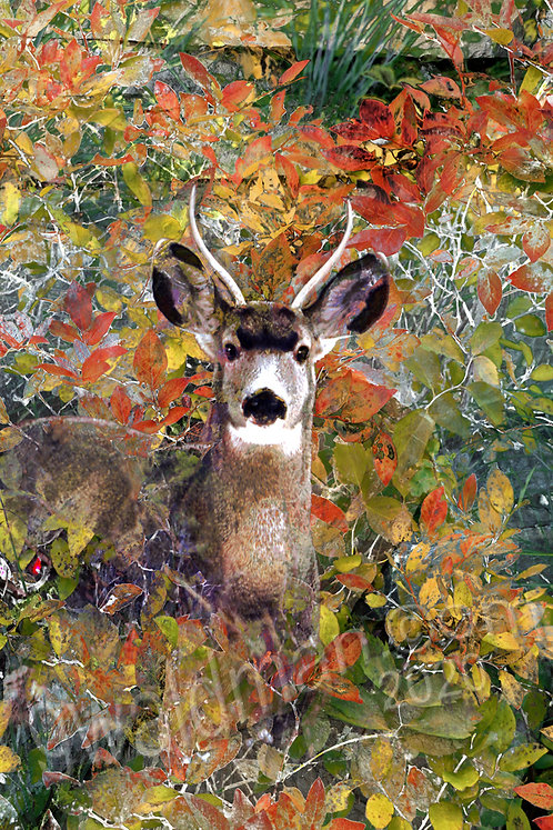 Tapestry Camouflage