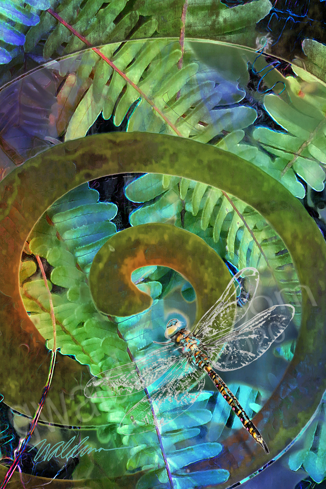 Spiral Dragonfly Detail 2
