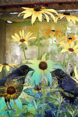 Summer Crow Duet