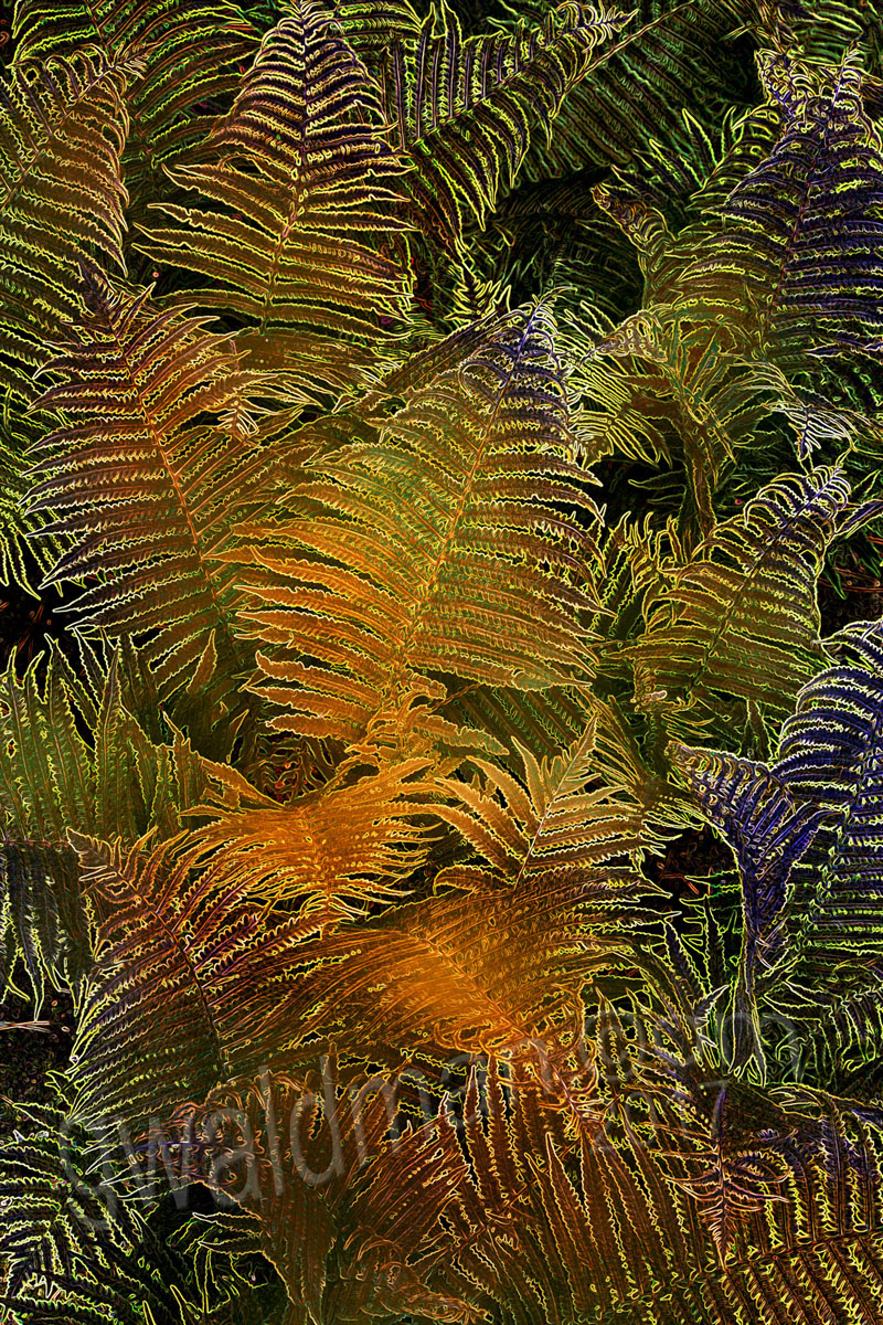Fern in C Minor