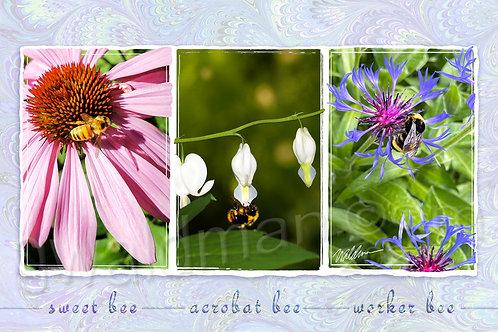 Bee Trio II-5x7 art card