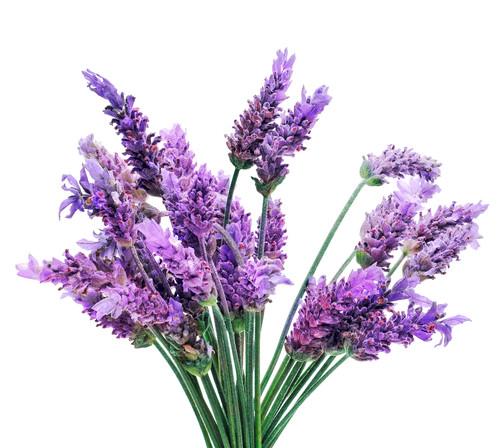 lavender, herbs for immune system