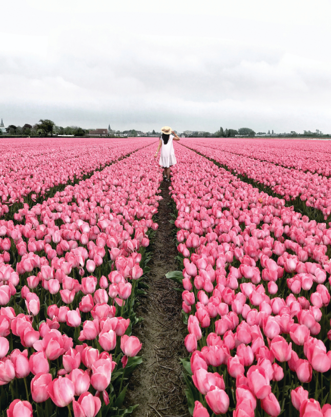 tulips, field of flowers, travel tips