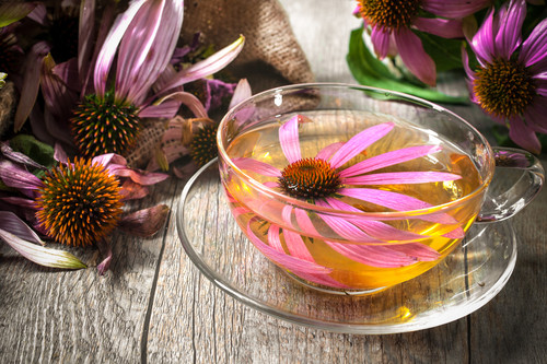 echinacea, immune system herbs