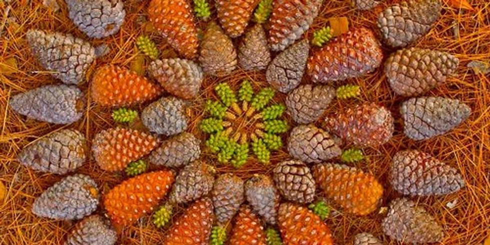 Atelier Land Art & Mandalas d'automne