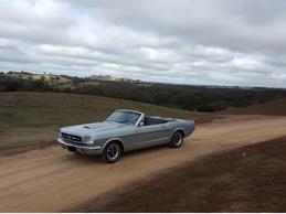 Wild Mustang.png