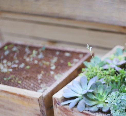 Growing Plants_edited.jpg