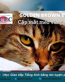 DCECVN_ Golden_Brown_Eyes.jpeg