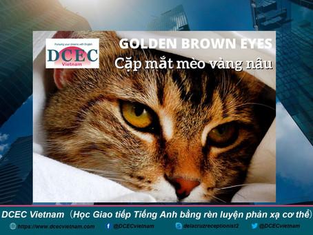 Golden Brown Cat Eyes■Cặp mắt mèo vàng nâu