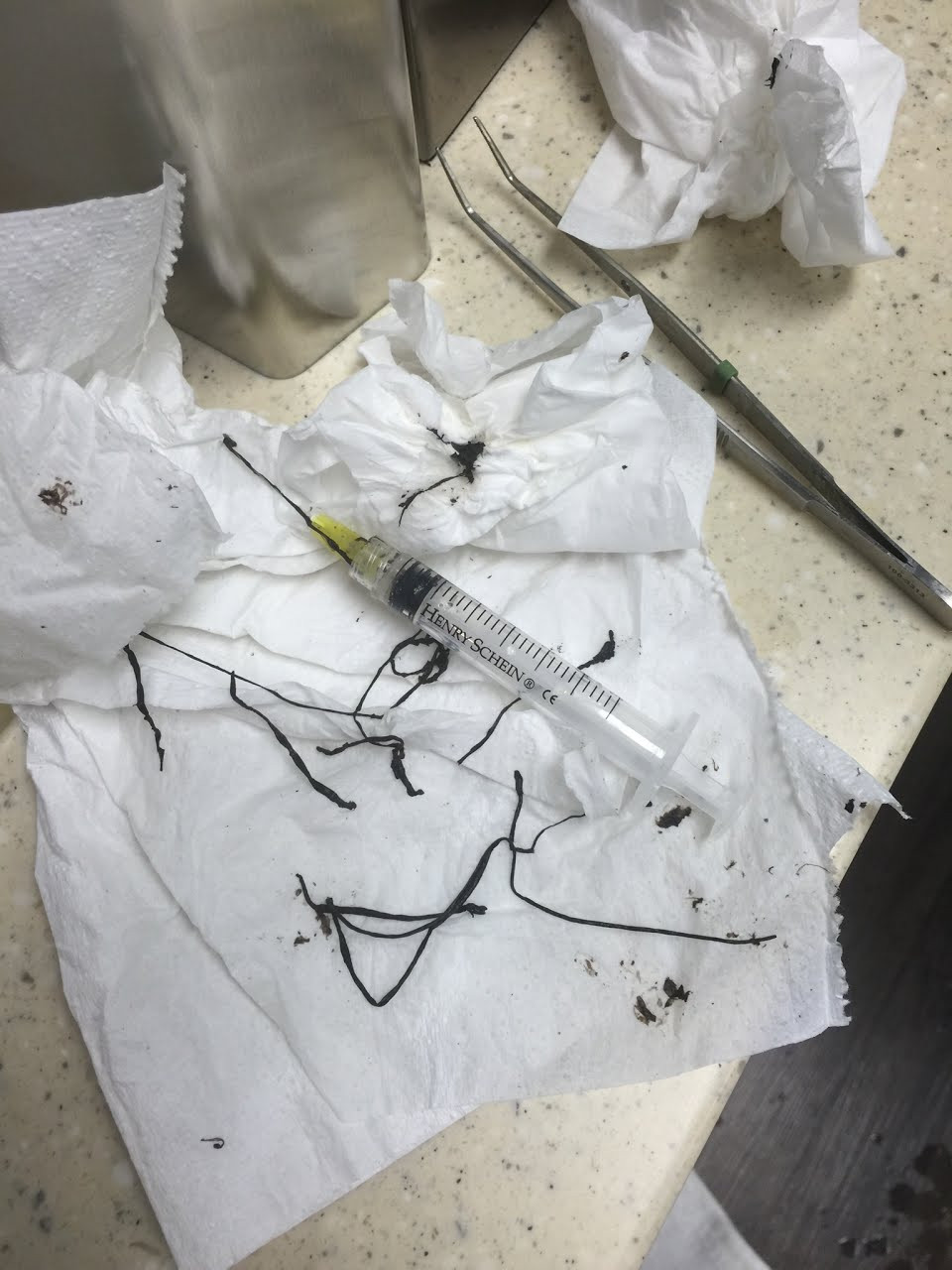 Bacteria extracted from dental unit waterline