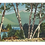 Thumbnail: Framed Postcard of Chocorua, NH