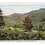 Thumbnail: Framed Postcard of Pinkham Notch, NH