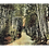 Thumbnail: Framed Postcard: Birch Road, Bethlehem, NH