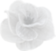 Flower 1 30%.png