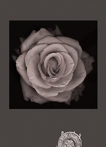 pinkrose3BW.jpg
