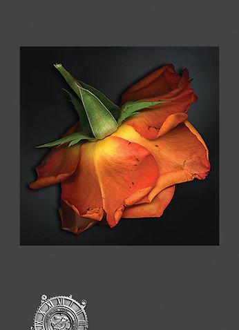roseunder4.jpg