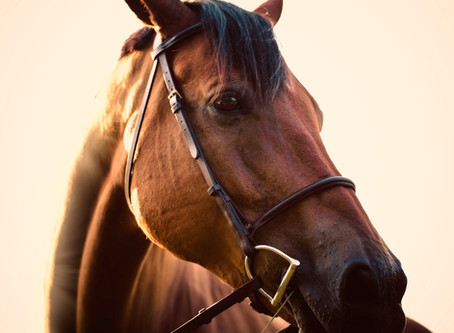 What horse calming supplement should I use?