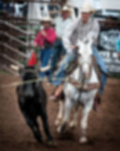 calf roping horse