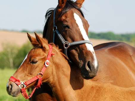 I think I want to breed my mare, now what?