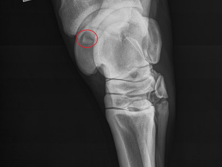 Why taking radiographs before purchasing your next horse is valuable!