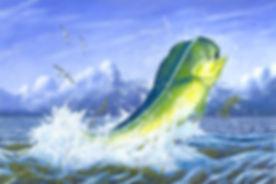 dolphinweedshi.jpg