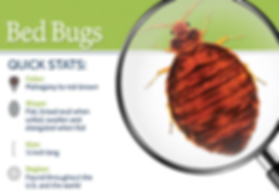 Quick Stats about bed bugs