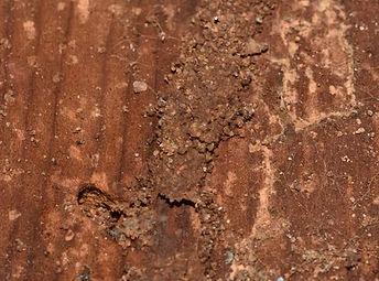 Mud Tubes