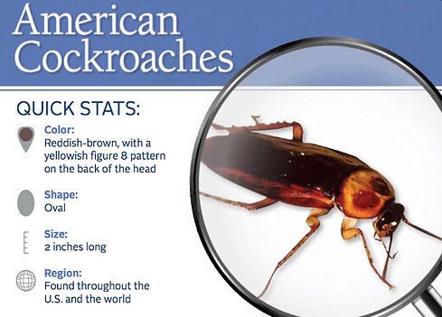 Quick Stats on Cockroaches