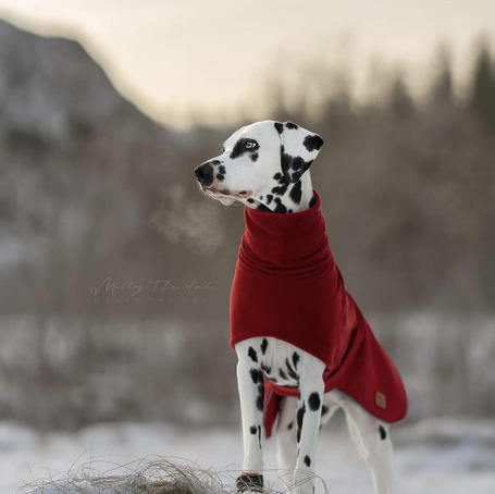 Softshell Winter Coat