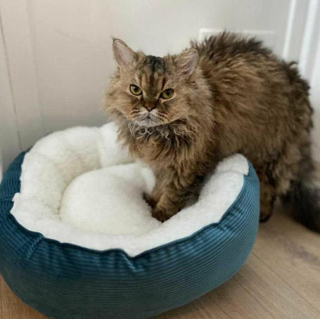 Kitty Donut Bed