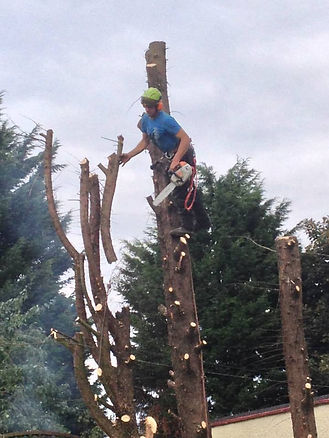 Tree Surgery, AP Solutions, Adam Penn