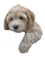 puppy1.png