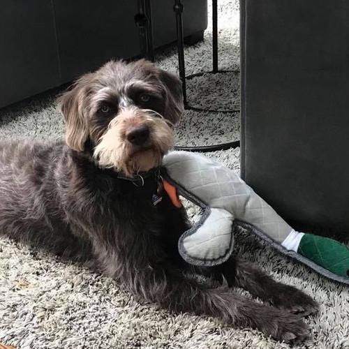 Wyatt with duck