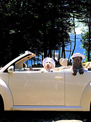 Brinkley and Sadie in car.jpg