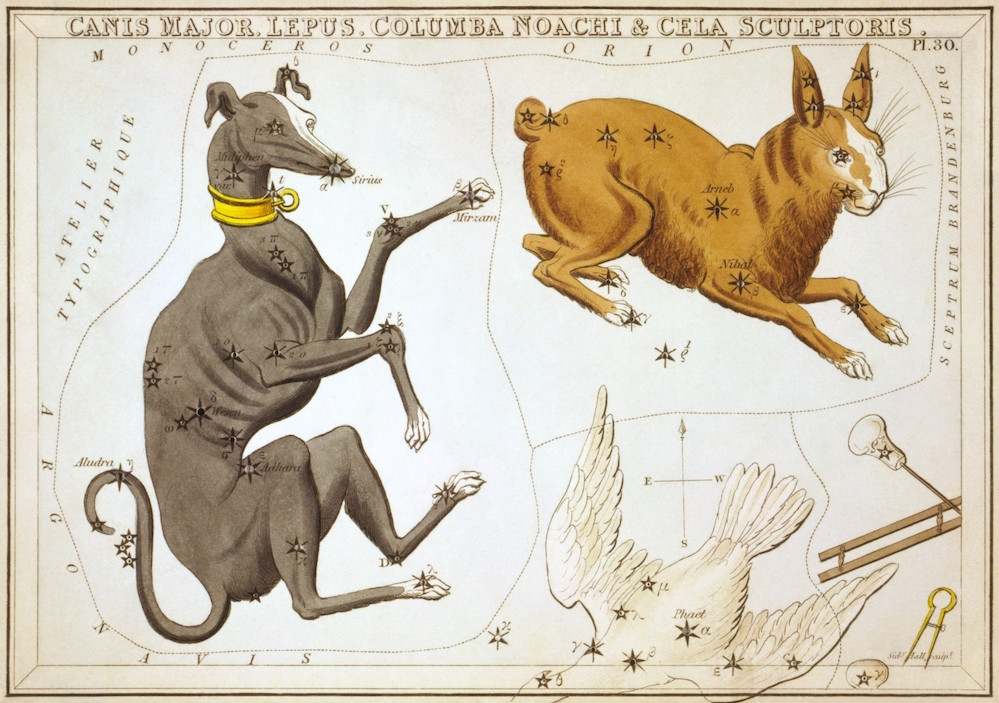 Canis Major and Lepus constellation drawings Urania's Mirror