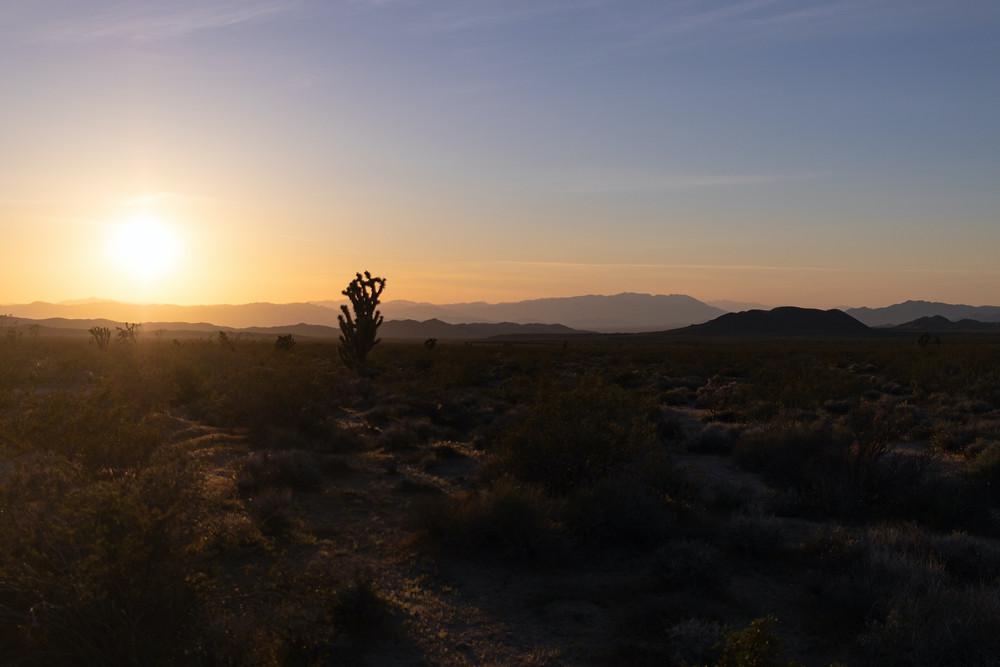 Sunset cactus desert Mojave