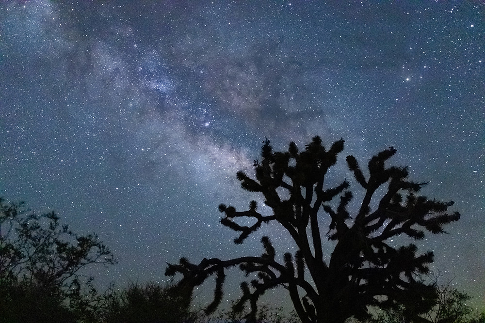 The Milky Way rising behind the trees at Mojave National Preserve in California