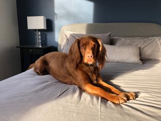 Pets: Friend or Foe in Rental Property?