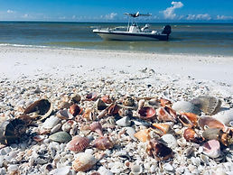 Shelling in Fort Myers Beach