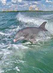 dolphin 15.jpg