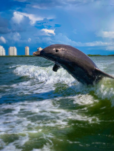 Dolphin Tours Fort Myers Beach