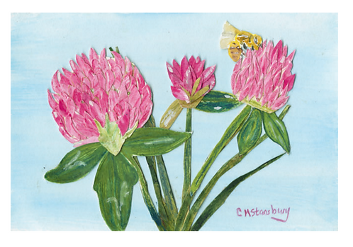 Clover with Bee
