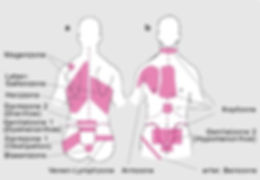 Bindegewebsmassage Reflexzonen Reflexzonentherapie