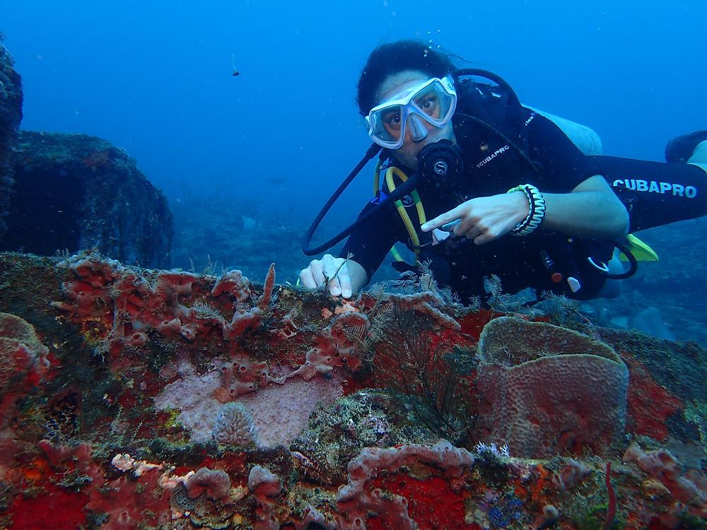 Diving in Panama Portobelo