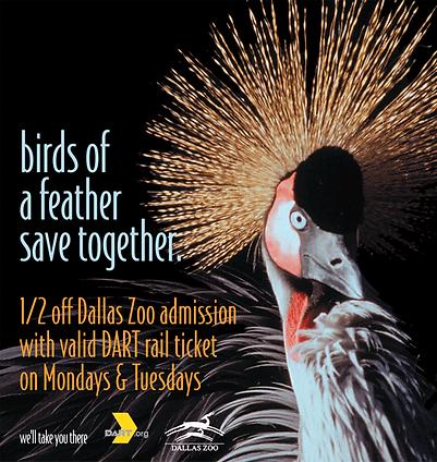 DART, zoo day, poster, bird