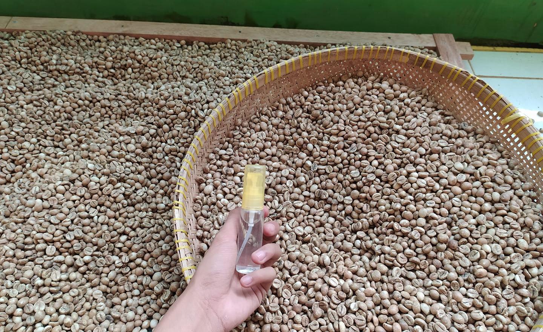 Greenbean Honey Proses Desa Karang Pendeta OKUS