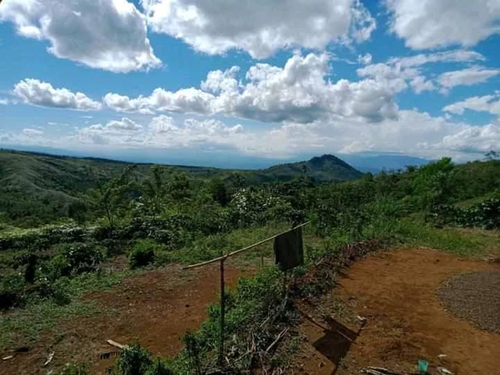 Perkebunan Kopi di Lintang Kab. Empat Lawang