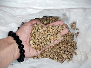 PW%20Robusta%204lawang1_edited.jpg