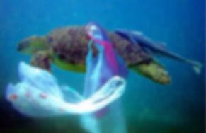 plastic turtle.jpg